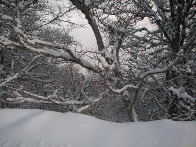 20090104190143-invierno-de-2008-023.jpg
