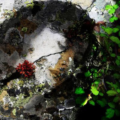20090120170417-ana-alcaraz-liquenes.jpg