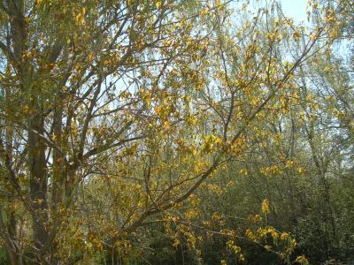 20090325104420-ribera-ebro-primavera-09-034.jpg