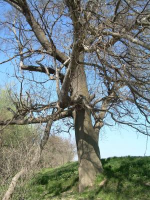 20090326115014-ribera-ebro-primavera-09-010.jpg