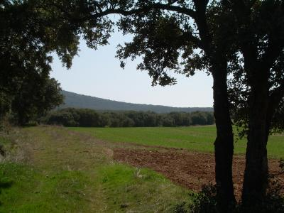 20090511094614-villarreal-primavera-09-090.jpg