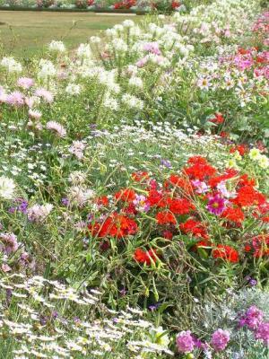 20090913191621-flores-en-versailles.jpg