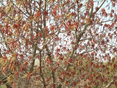 20110119125134-amento-rojo-008.jpg