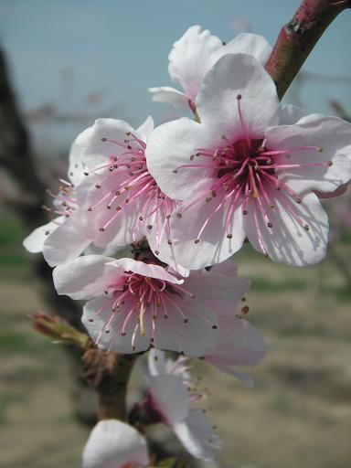 20110326212302-movera-25-marzo-2011-005dos.jpg