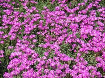 20110509105639-3-abril-fucsia-2-dos-.jpg
