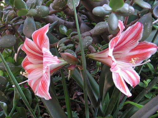 20110516185039-12-mayo-2011-mi-jardin-2.jpg