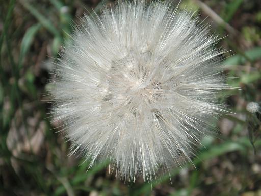 20110519120926-13-abril-2011-086vilanos.jpg