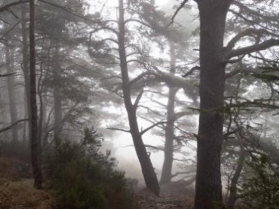 20110930171706-moncayo-bosque-03tres.jpg