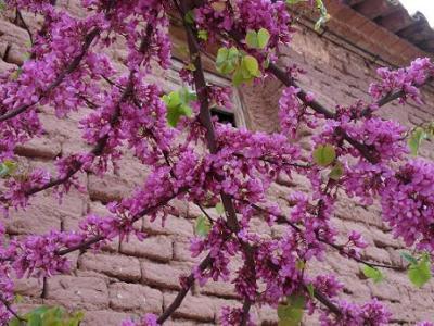 20120410103459-flores.jpg