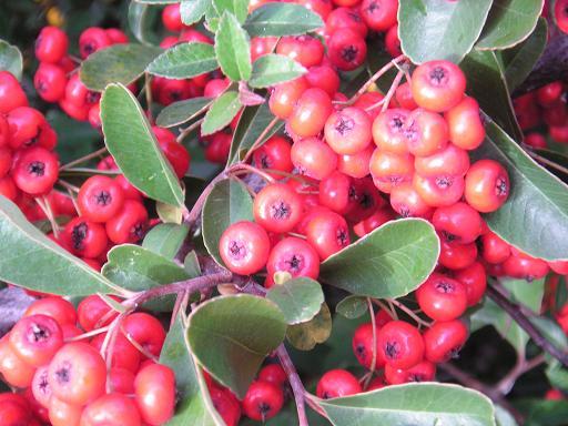 20121207183623-frutos-en-rojo.jpg