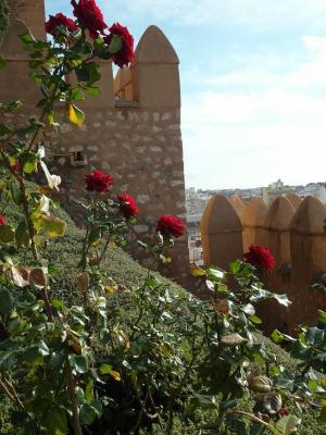 20121224122914-roquetas-de-mar-rosas121.jpg