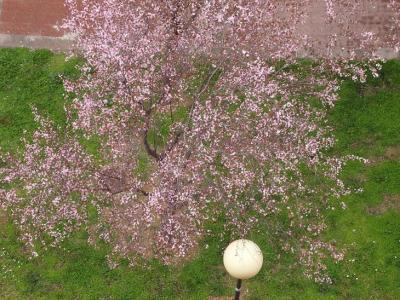 20130308214231-primavera-3-marzo-2013-783.jpg