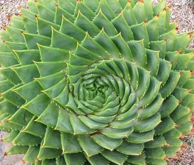20140104204651-el-aloe-espiral-naturaleza-geometrica-01.jpg