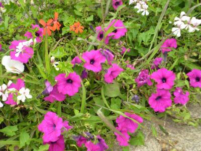 20080826193533-candas-008-rosa-025.jpg