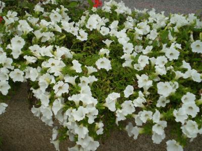 20080827173431-candas-008-rosa-024.jpg
