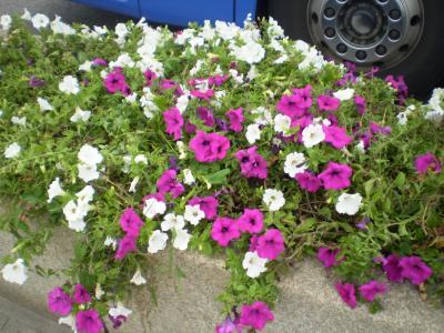 20080830113342-candas-008-rosa-027.jpg