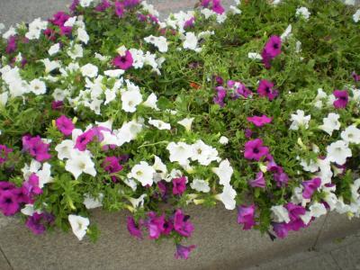 20080904184557-candas-008-rosa-029.jpg