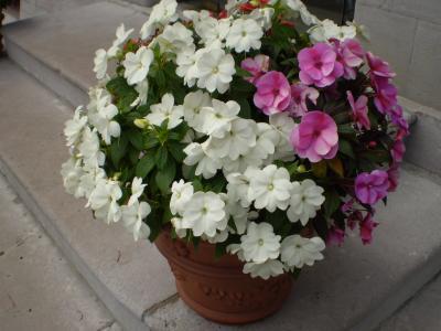 20080911020232-candas-008-rosa-062.jpg