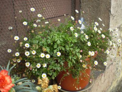 20080913200029-candas-008-rosa-065.jpg