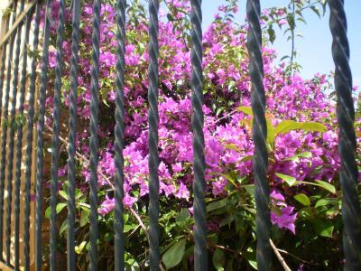 20080916221937-candas-008-rosa-322.jpg