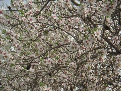 20110404103717-3-abril-2011-140.jpg