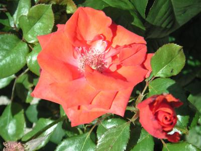 20110715225613-moncayo-18-junio-2011-075.jpg