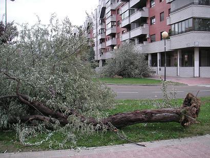 20111109131901-ciercera-nov-2011-005.jpg