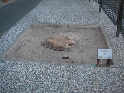 20111116130628-museo-iacc-y-arboles-004tocon.jpg