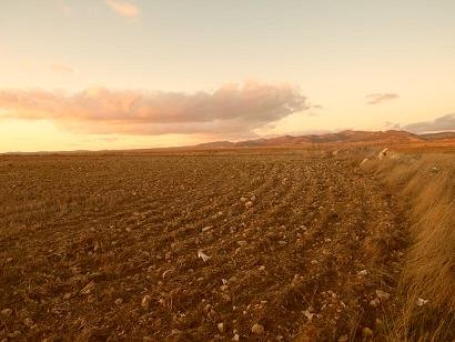 20120123172421-surcos-en-gallocanta.jpg