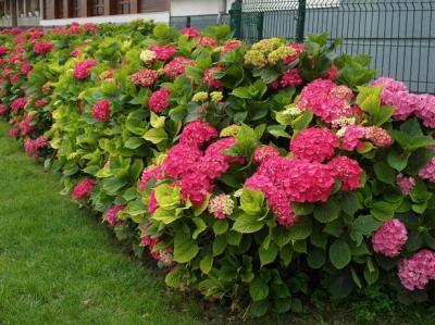 20120704220242-jardin-en-ondarribiasam-2809.jpg