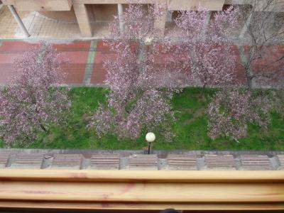 20130308213940-primavera-2-marzo-2013-782.jpg